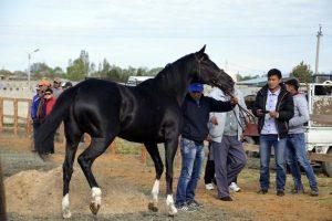tour in Kyrgyzstan